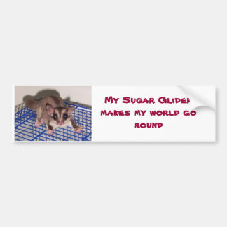 Sugar Glider are COOOL Bumper Sticker