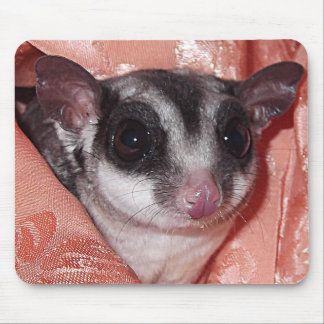 Sugar Glider Close-Up in Pink Silk Mouse Pad