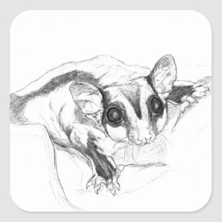 Sugar Glider Drawing, Sketch Square Sticker