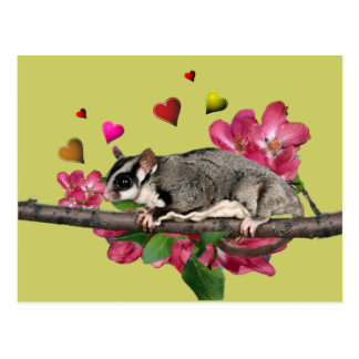 Sugar Glider Flowers and Hearts Postcard