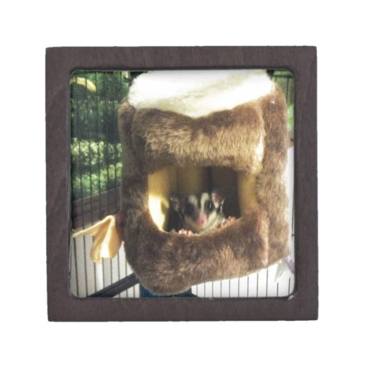 Sugar Glider in Furry Tree Truck Hanging Bed Jewelry Box