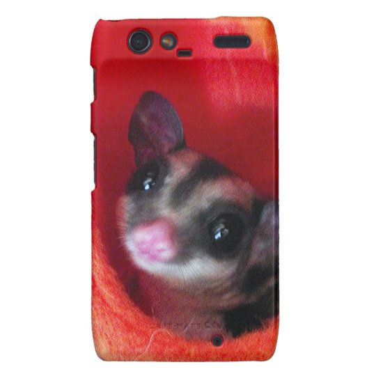 Sugar Glider in Orange Hanging Bed Droid RAZR Cover