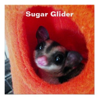 Sugar Glider in Orange Hanging Bed Posters
