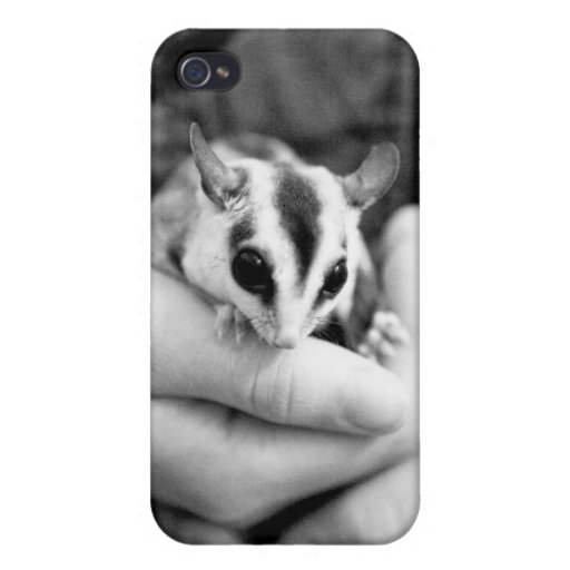 Sugar Glider iPhone case iPhone 4/4S Covers