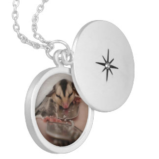 sugar glider locket