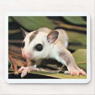 Sugar Glider Mouse Pad