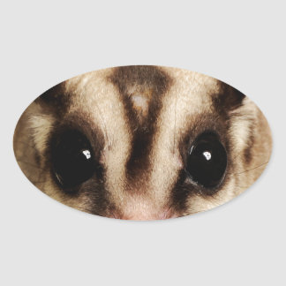 Sugar Glider Oval Sticker