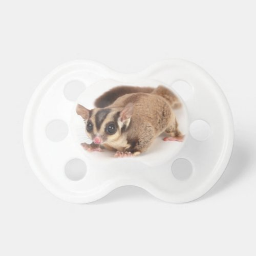 sugar glider as pet