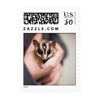 Sugar Glider postage (small)
