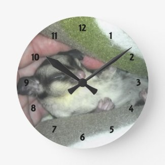 Sugar Glider Sleeping in Blanket Round Clocks