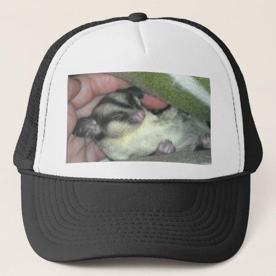 Sugar Glider Sleeping in Blanket Trucker Hat