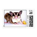 Sugar Glider Stamp