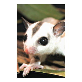Sugar Glider Stationery