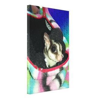 Sugar Glider Wearing a Hat Stretched Canvas Prints