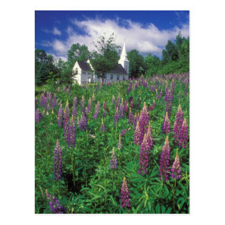 Sugar Hill New Hampshire Lupines and Church Postcard