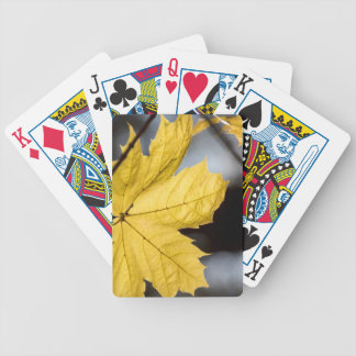 Sugar maple, fall bicycle playing cards