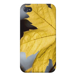 Sugar maple, fall iPhone 4/4S case