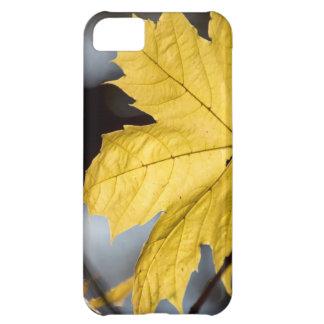 Sugar maple, fall iPhone 5C case
