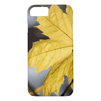 Sugar maple, fall iPhone 8/7 case