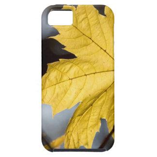 Sugar maple, fall iPhone SE/5/5s case