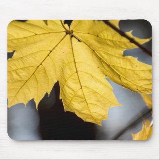 Sugar maple, fall mouse pad
