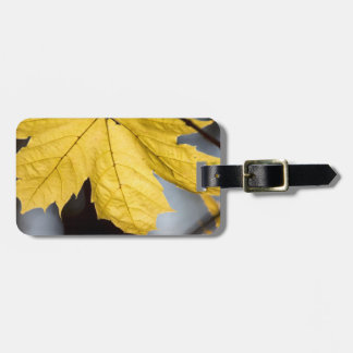 Sugar maple, fall tags for bags