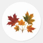 Sugar Maple Leaves Round Sticker