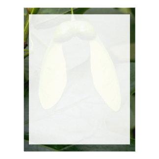 Sugar maple tree fruit (acer saccharum) custom letterhead