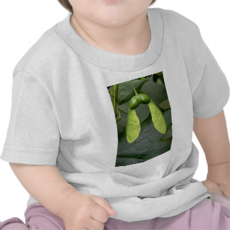 Sugar maple tree fruit (acer saccharum) shirts