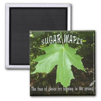 SUGAR MAPLE TREE LEAF MAGNET