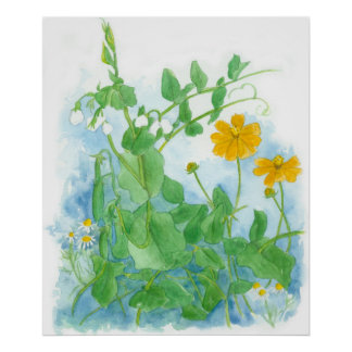 Sugar Snap Peas Vegetable Garden Watercolor Art Poster
