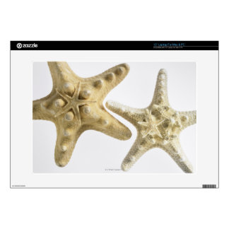 Sugar starfish on a thorny starfish laptop decals