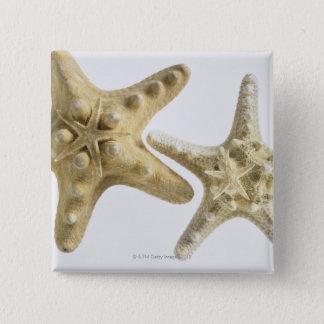 Sugar starfish on a thorny starfish pinback button