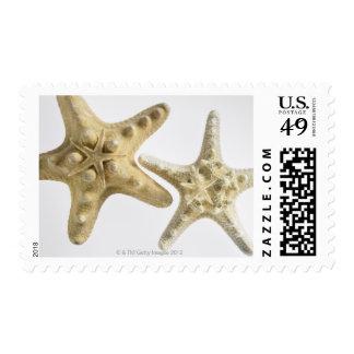 Sugar starfish on a thorny starfish postage
