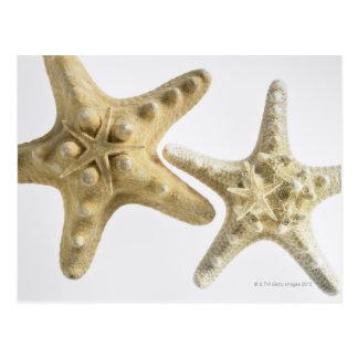 Sugar starfish on a thorny starfish postcard