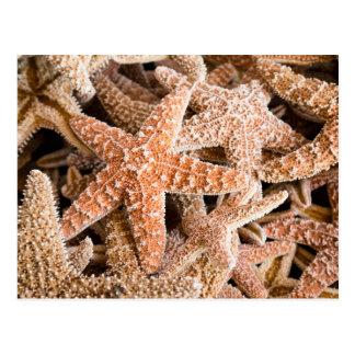 Sugar Starfish Postcard