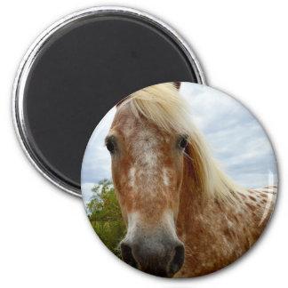 Sugar The Appaloosa Horse,_ Magnet