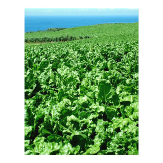 Sugarbeet field flyer