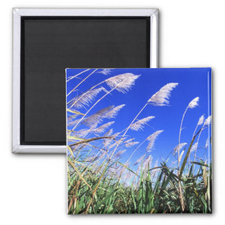 Sugarcane Field 2 Inch Square Magnet