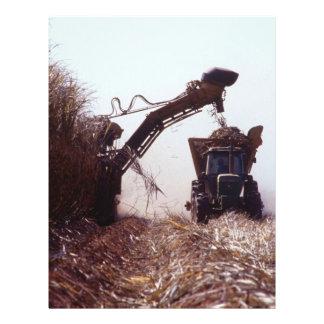 Sugarcane harvest personalized flyer
