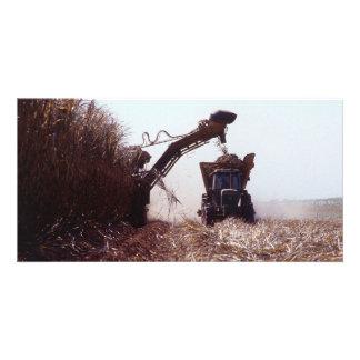 Sugarcane harvest photo card