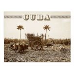 Sugarcane plantation in Cuba Post Cards