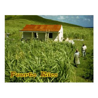 Sugarcane Plantation, Puerto Rico Post Card