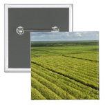 Sugarcane Plantations, Guyana Pinback Button