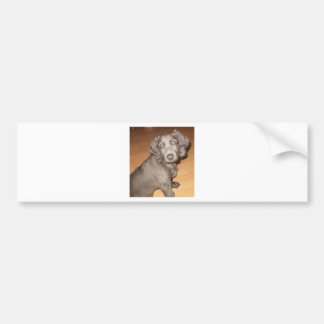 Suki 8 wks old 1st night home (6).JPG Bumper Sticker