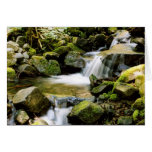 Sul Duc stream Greeting Card