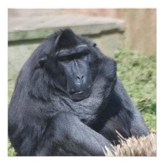 Sulawesi Macaque Custom Invites