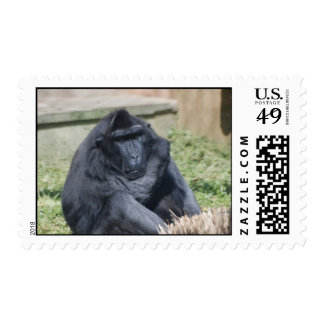 Sulawesi Macaque Stamp