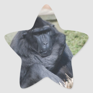 Sulawesi Macaque Sticker
