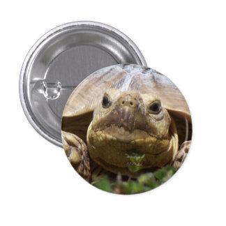Sulcata Tortoise Pinback Buttons